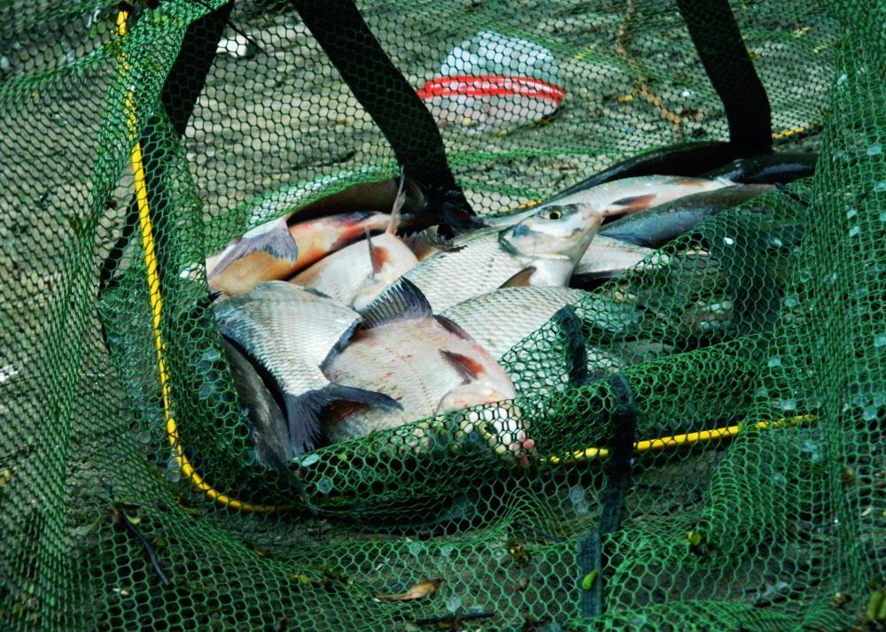 рыбалка на реке кубань в краснодаре на фидер