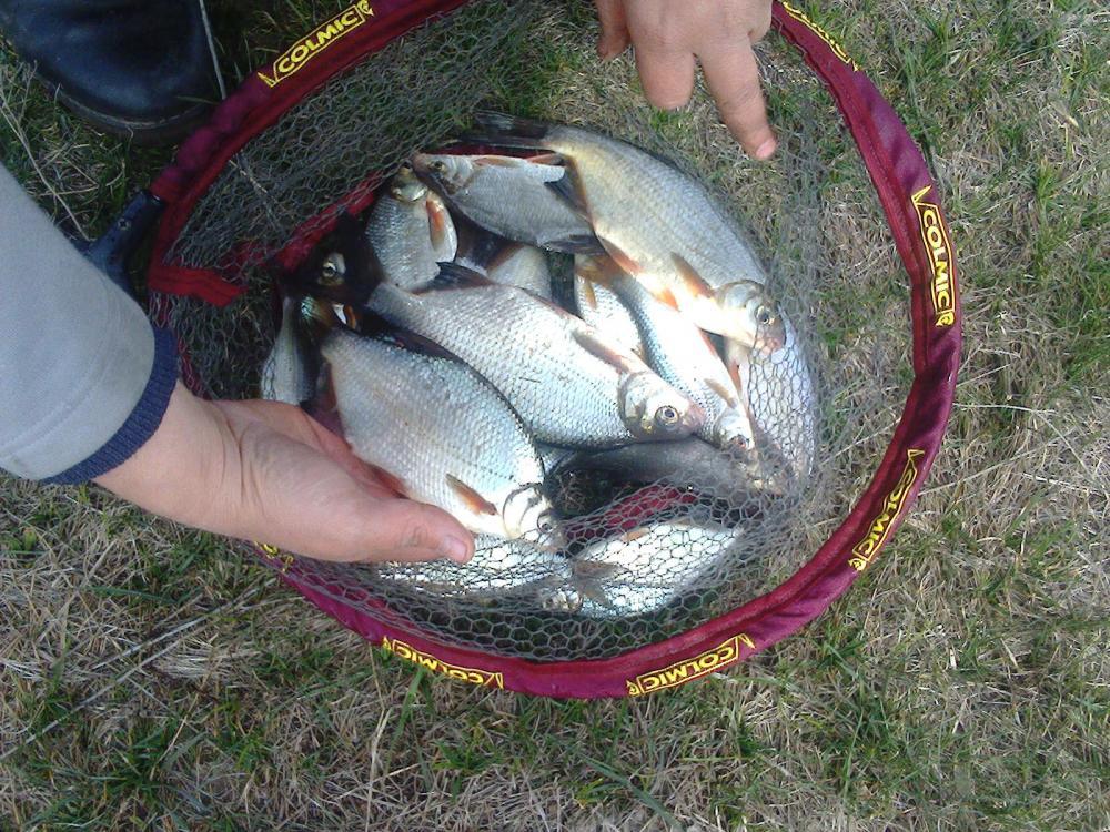 Рыбалка на днепре когда что клюет