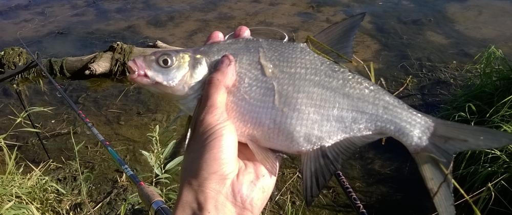 рыбалка на верхней волге цены