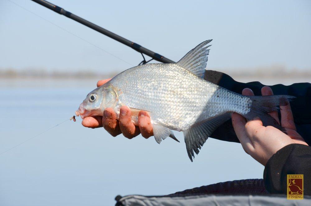 Рибний клев